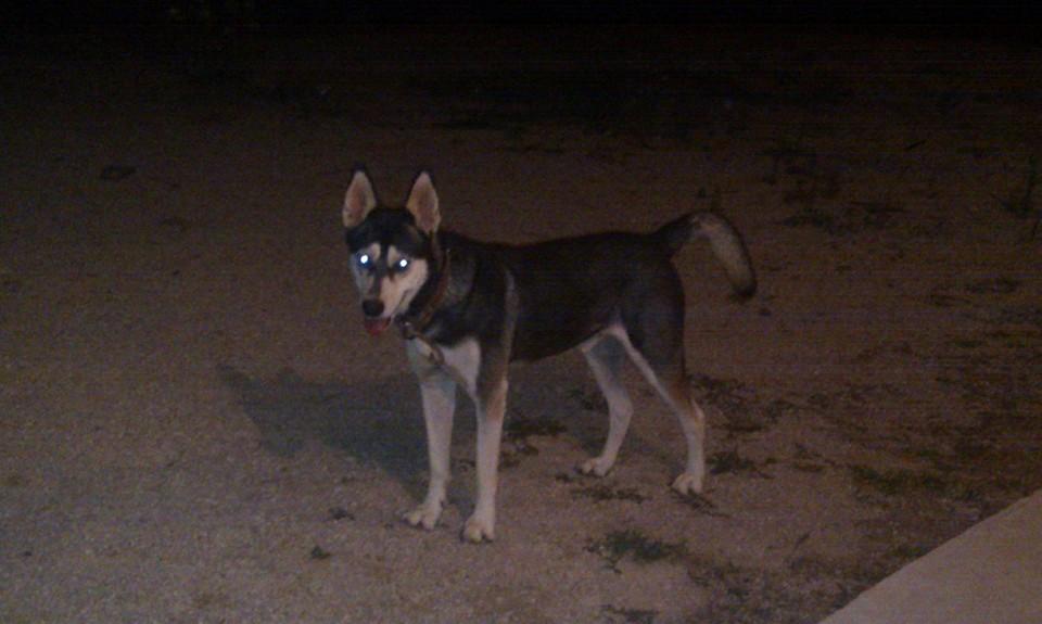 Σκυλάκι χάθηκε στη Ψίνθο !